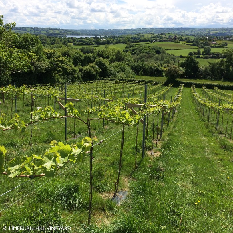 Limeburn Hill wine tour