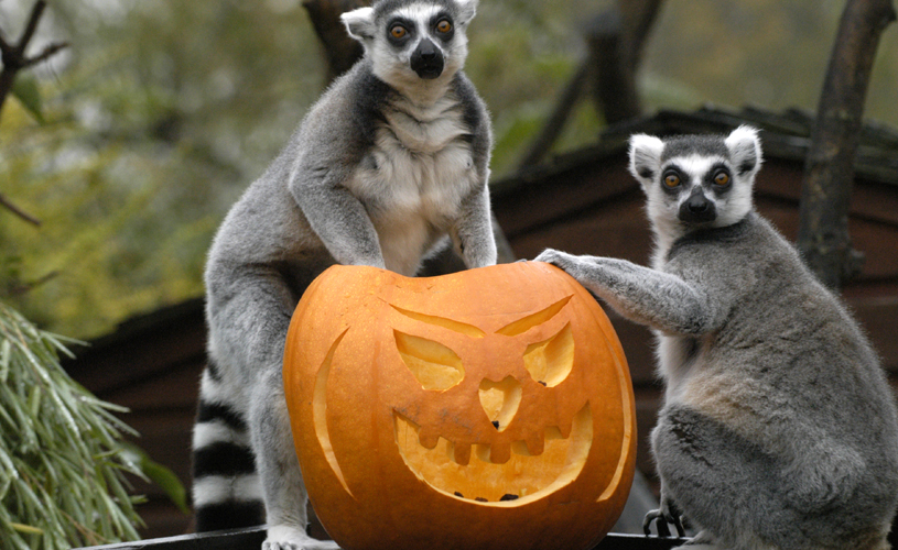 Bristol Zoo Gardens - 11 Fun things to do in Bristol in October 2018