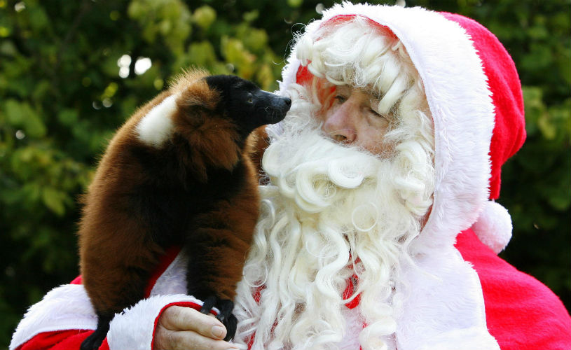 Bristol Zoo Gardens - the ultimate Bristol Christmas gift guide