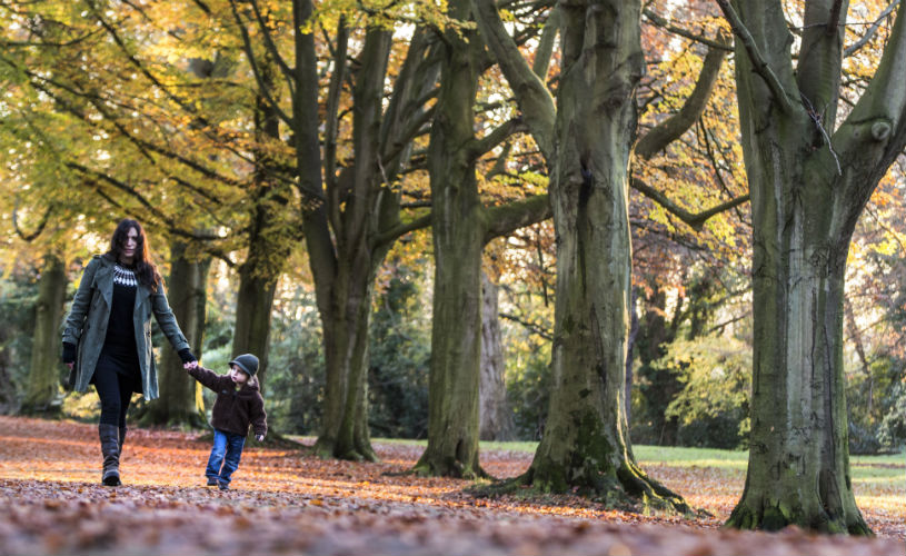 Clifton Down - Bristol's best parks for autumn leaf-peeping