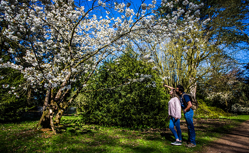 Two people looking at spring blossom at Westonbirt Arboretum