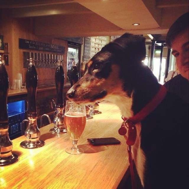 Royal Navy Volunteer - dog-friendly places to go for a pint with your pooch in Bristol