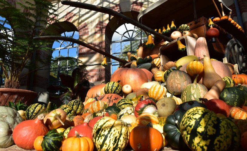 Seasonal Squash Display at Tyntesfield