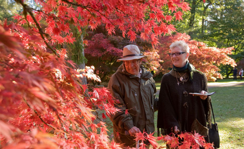 Westonbirt Arboretum - Bristol's best parks for autumn leaf-peeping