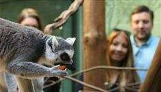 Amazing animal experiences when staying at The Lodge at Bristol Zoo Gardens