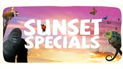 Sunset Specials at Bristol Zoo