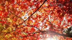 Thumbnail for Bristol's best parks for autumn leaf peeping