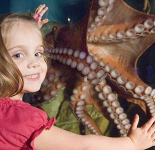 Little girl looking at giant octopus in Bristol Aquarium