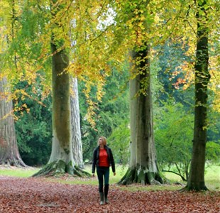 Going for gold: Autumn in the West Country