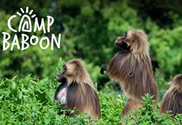 Camp Baboon Wild Place Project