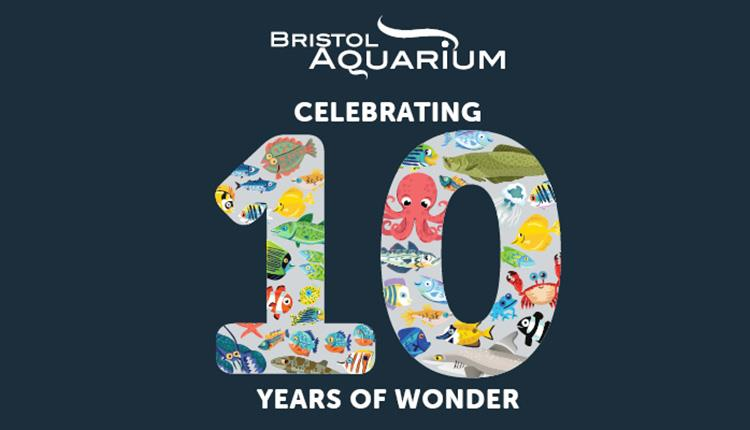 Celebrating 10 years of Wonder at Bristol Aquarium