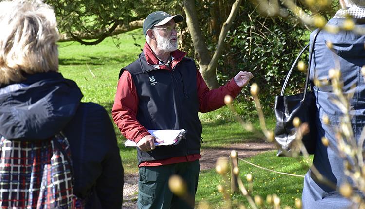 Champion tree walk at Tyntesfield