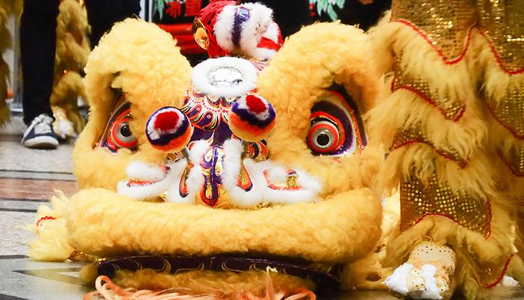 Chinese New Year Year of the Pig at Bristol Museum & Art Gallery