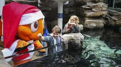 Christmas Reef at Bristol Aquarium. CREDIT James Beck