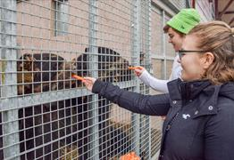 Meet the bears at Noah's Ark Zoo Farm