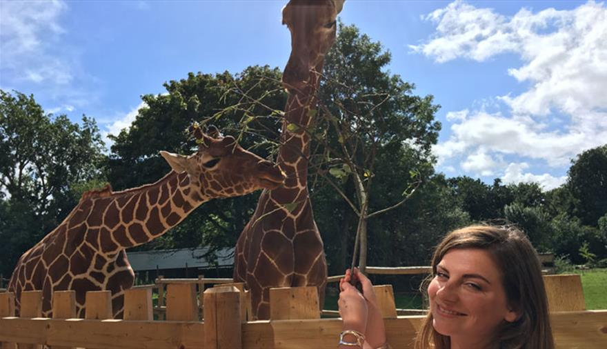 Giraffe Experience at Wild Place Project