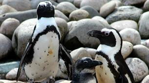 Meet the penguins at Bristol Zoo Gardens