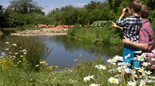 Child at WWT Slimbridge Wetland Centre