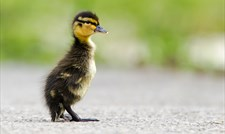 Spring to Life at WWT Slimbridge Wetland Centre