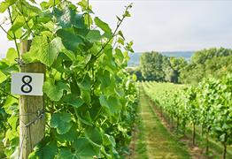 Aldwick Estate Vineyard Tours & Wine Tasting