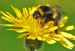 The plight of the bumblebee (Talk) at Bristol Zoo Gardens