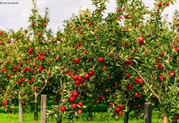 Orchard Management course at Somerset Rural Life Museum