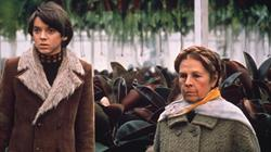 Harold and Maude screening at Arnos Vale Cemetery