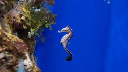 Seahorse Weekend at Bristol Aquarium