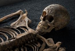 Skeletons: Our Buried Bones at M Shed